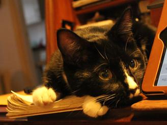 Humphrey the Tuxedo Cat