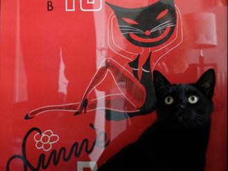 Black Cat Goes Home
