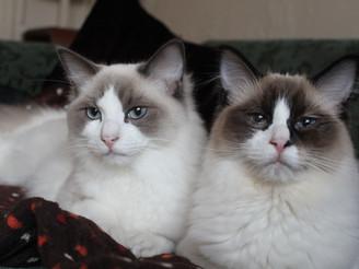 Kitten Capers