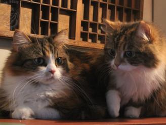 Aziza & Kosha