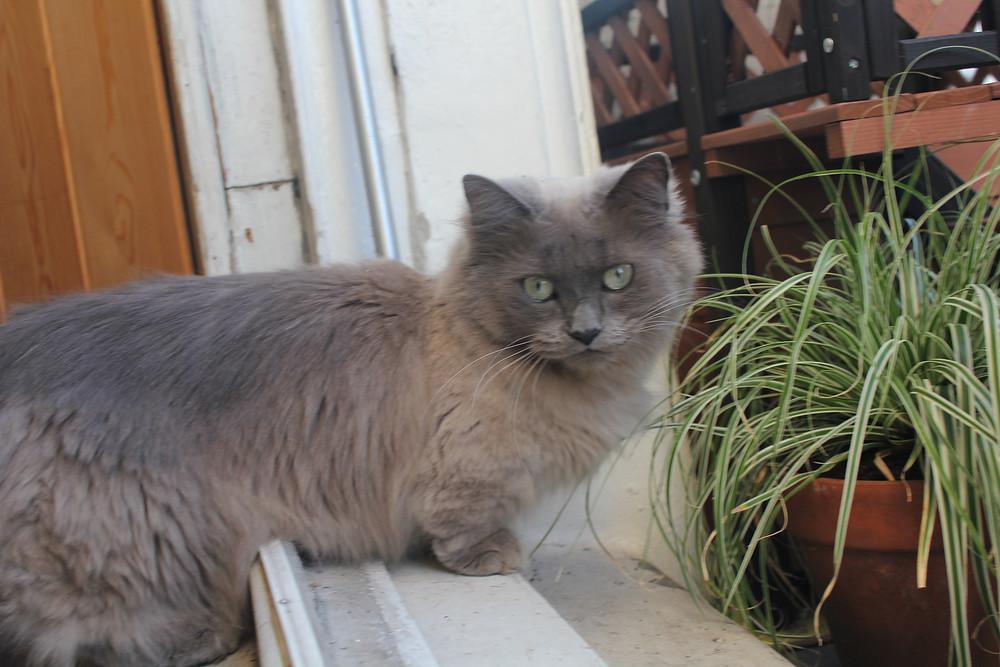 Sassy Notting Hill Cat COmpany