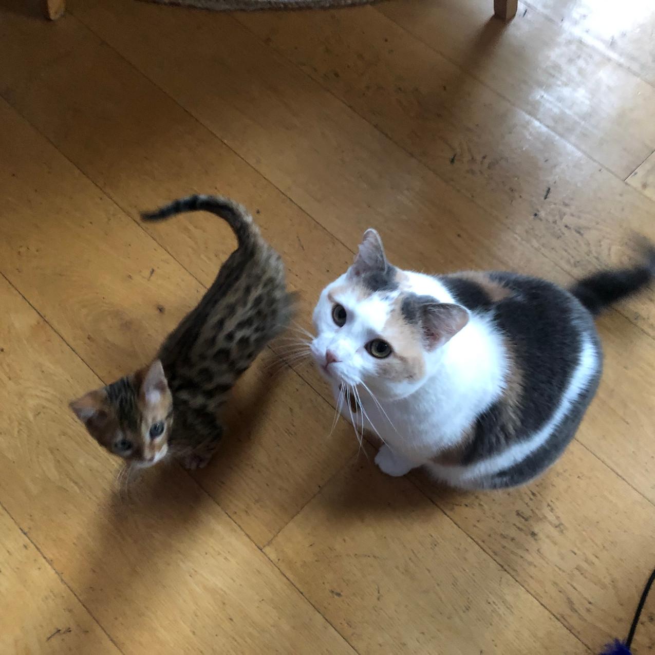 Mila and Tigger