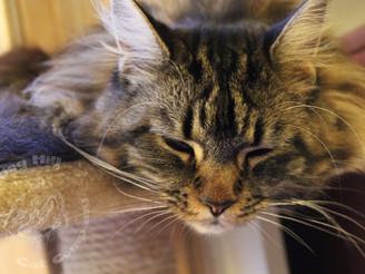 Comfy Cats (Pandora and Chicken)