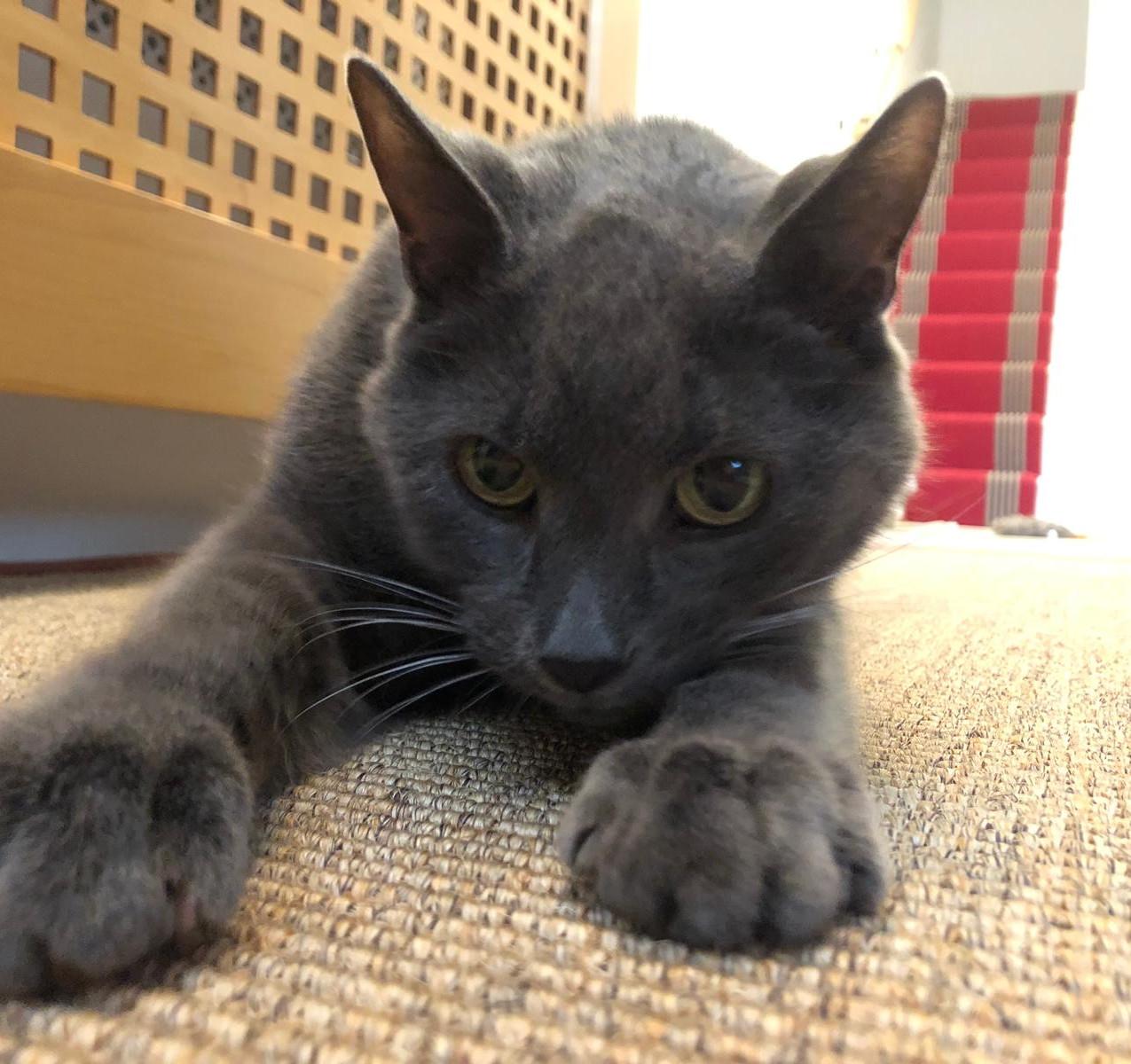 Pinot Grey Cat