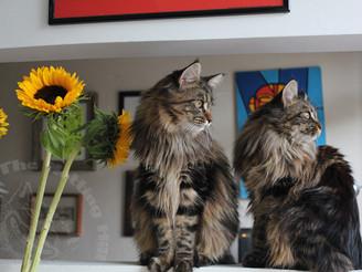 Cats & Carnival