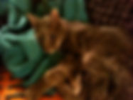 holland park cat boarding, Notting Hill cat boarding,West London, Kensington cat boarding, Maida Vale cat boarding, West London