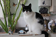 one on one exclusive cat boarding Notting Hill West London, Kensington cat boarding, Maida Vale cat boarding, West London