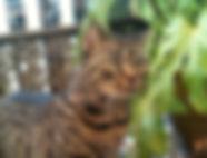 Cat Boarding Notting Hill