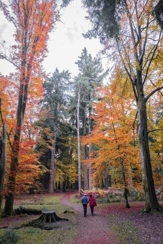 Tall Trees nov 2018 (8 of 22) (1).jpg