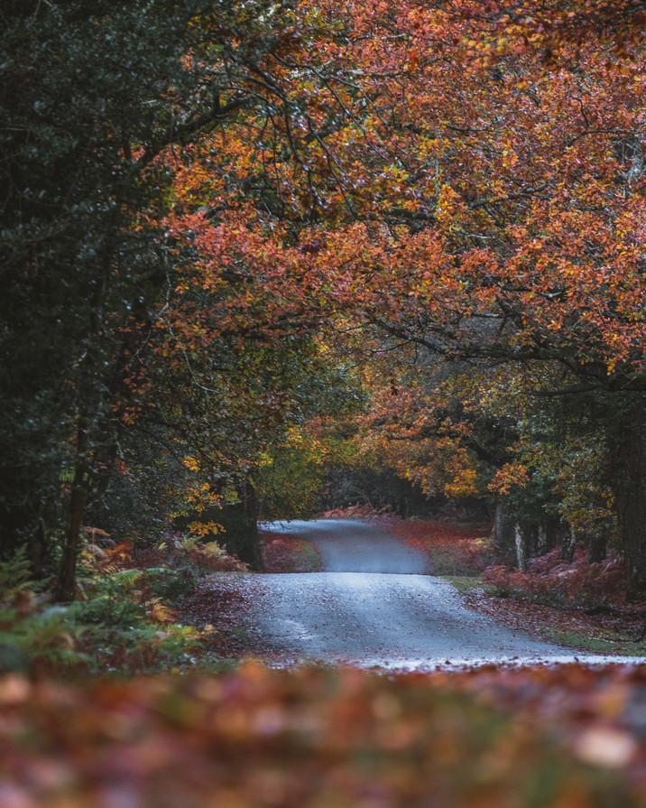 Pete Elliott Autumn New Forest 0711 (53