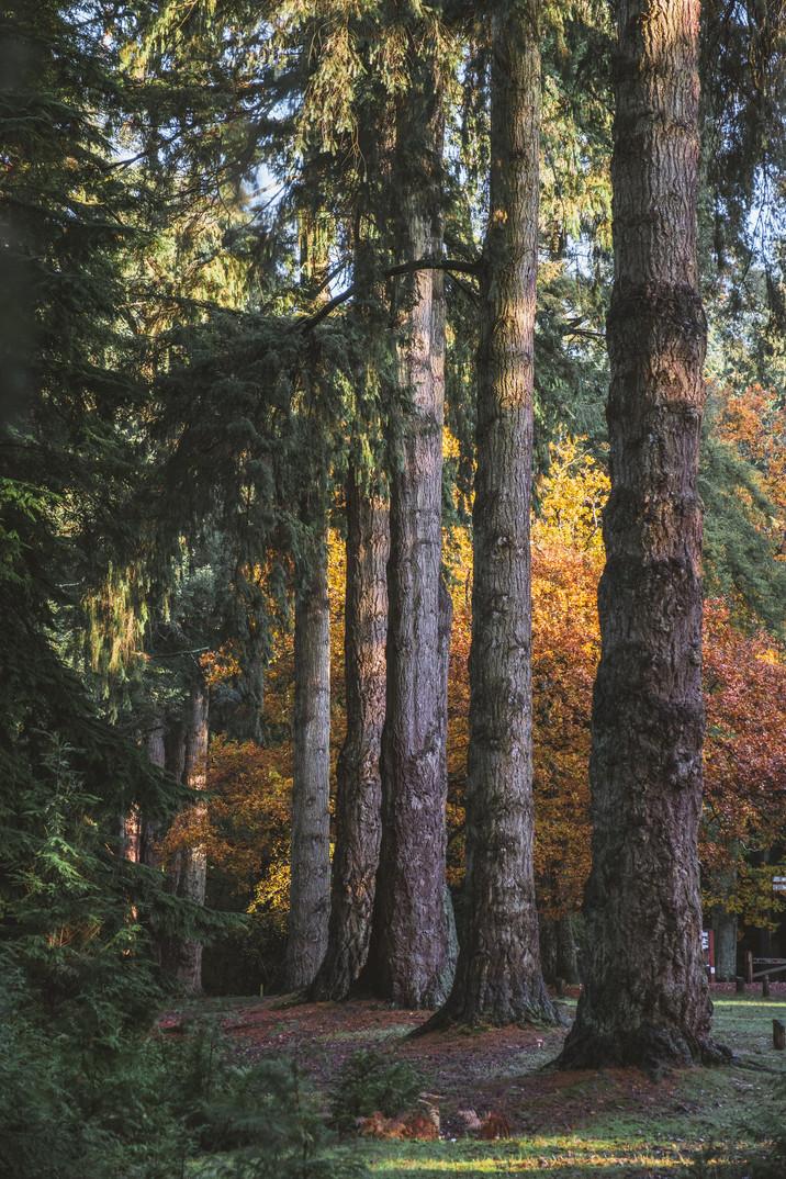 Pete Elliott Autumn New Forest 0711 (92