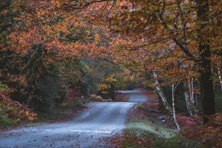 Pete Elliott Autumn New Forest 0711 (56