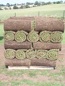 grass rolls lawn rolls pallet