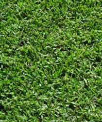 Grass Suppliers Turf Suppliers South Australia