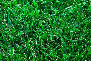 Tall Fescue Turf grass Instant Lawn Mount Gambier