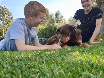 Instant Lawn grass turf Mount Gambier