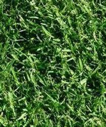 garden turf supplies lawn rolls mount gambier