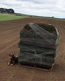 Turf Pallet Roll Out Lawn Mount Gambier