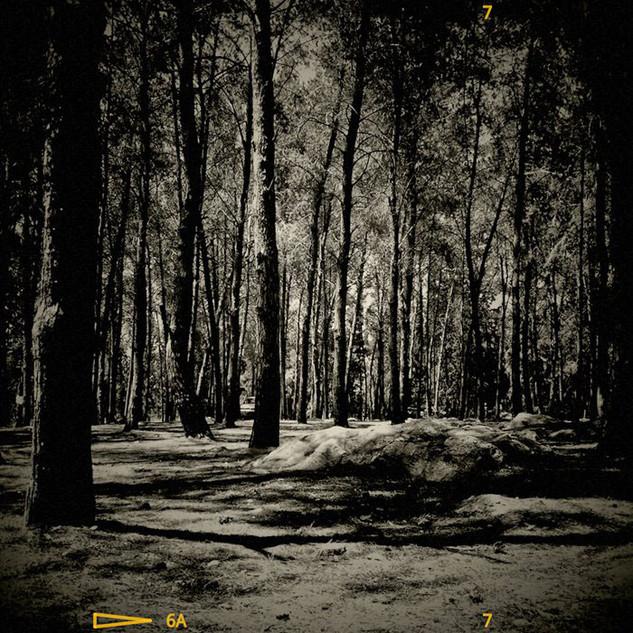 Forest_BW_28-5-11.jpg