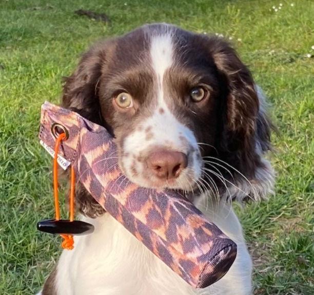Advanced Puppy Course