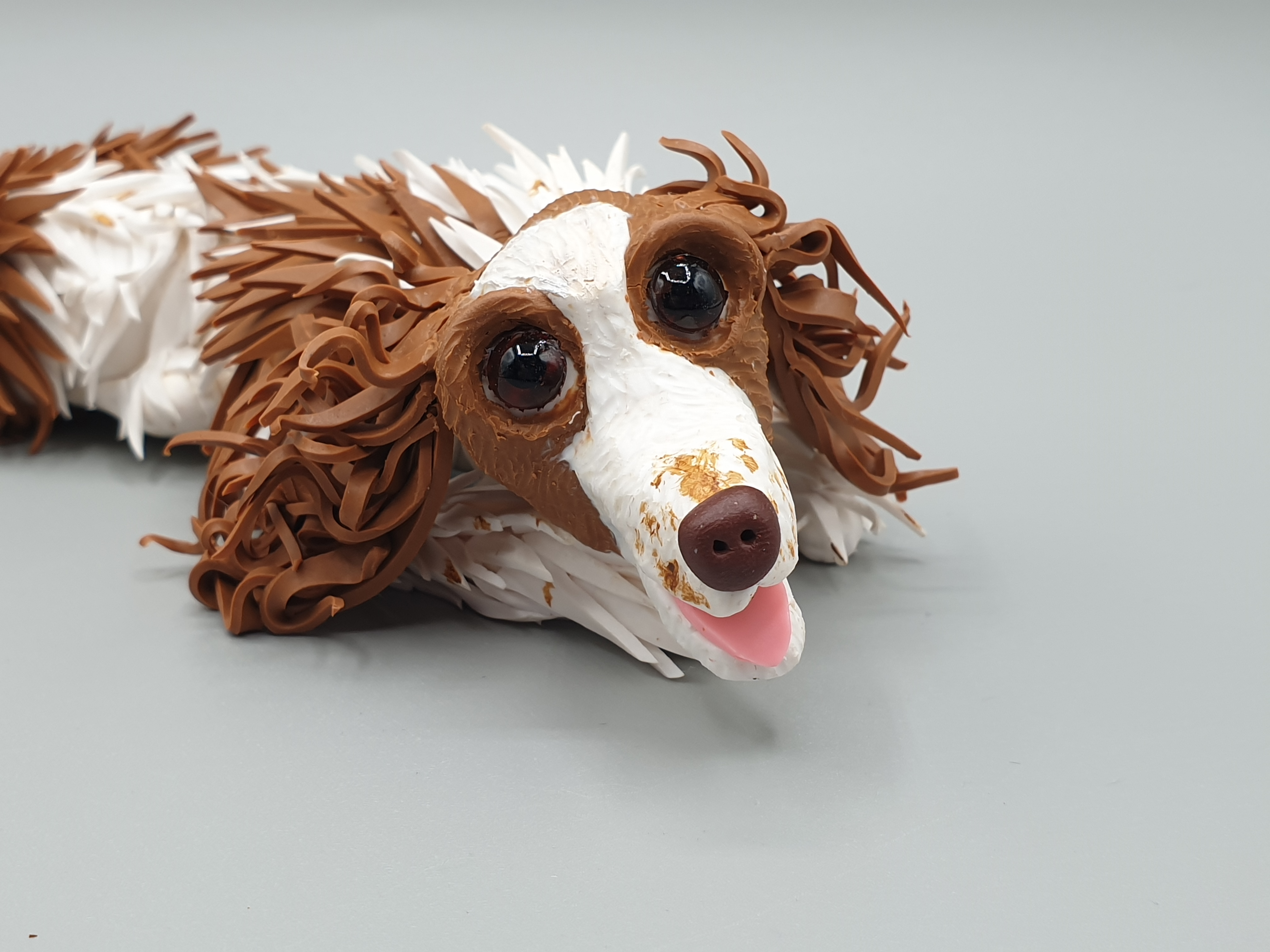 Meg the Welsh springer spaniel