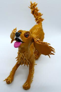 Macie the cocker spaniel
