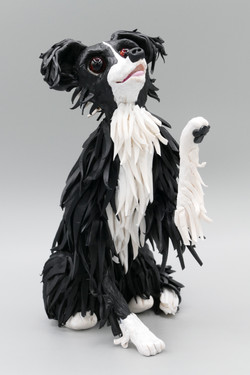Maizy the border collie