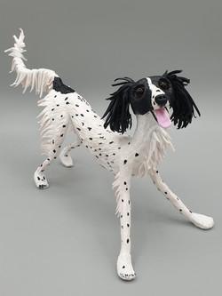 Bilbo the saluki x greyhound x springer
