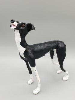 Rosie the greyhound