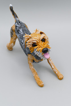 Alfie the Border terrier x Lakeland x Jack Russell