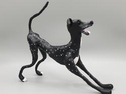 Leon the greyhound