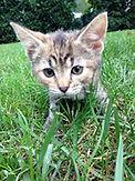 cat picture rescue.jpg