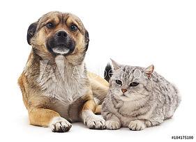 Dog and cat alone.jpeg