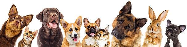 set of animals on a white background.jpg
