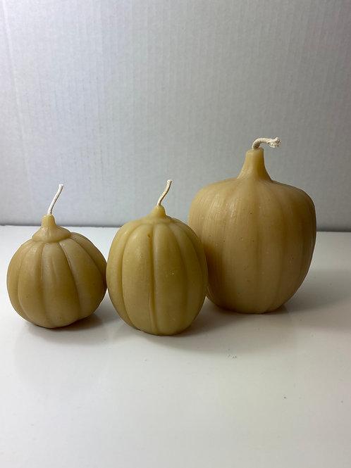 Pumpkin Trio, # 151