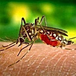 virus-del-nilo-mosquito2.jpg