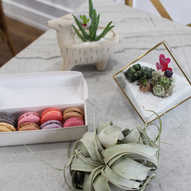 Macarons and Succulents