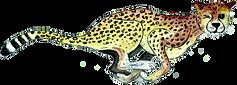 Fast Maths Cheetah.webp