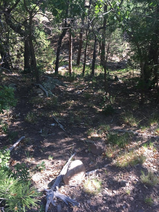 Gotta Duck on This Trail.jpg