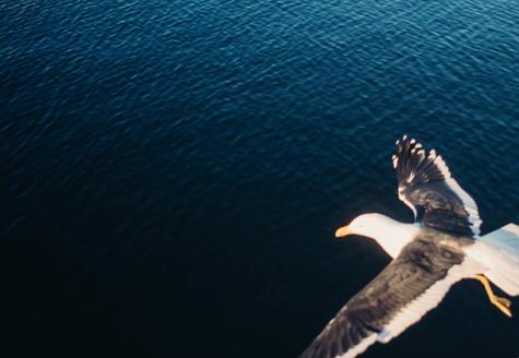 Hobart-Leica-7.jpeg