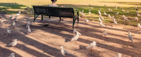 Where the birds hang out - Lecia Q