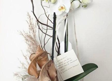 Orquídea boho