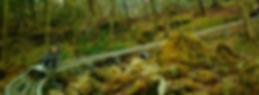 wildernessrunalpinecoaster.png