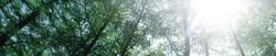 Trees-banner