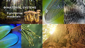 biomimicry masterclass2.jpg