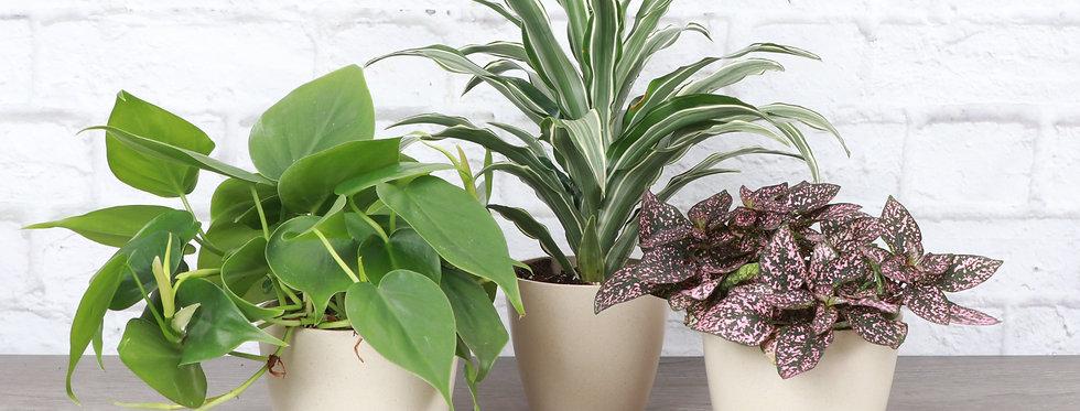 Windowsill Garden Houseplant Bundle