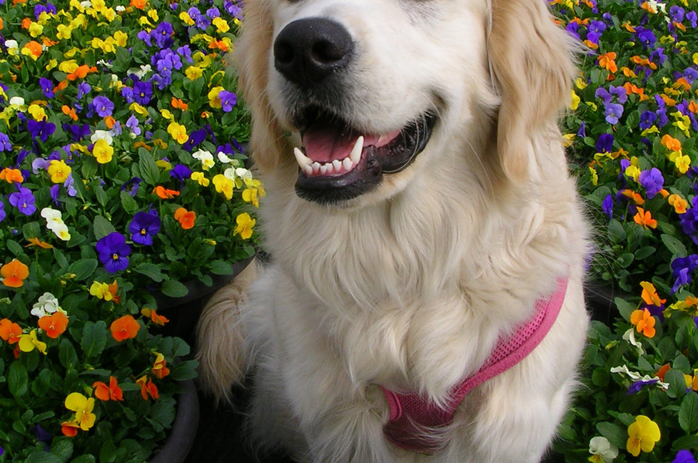 Lily the Greeter
