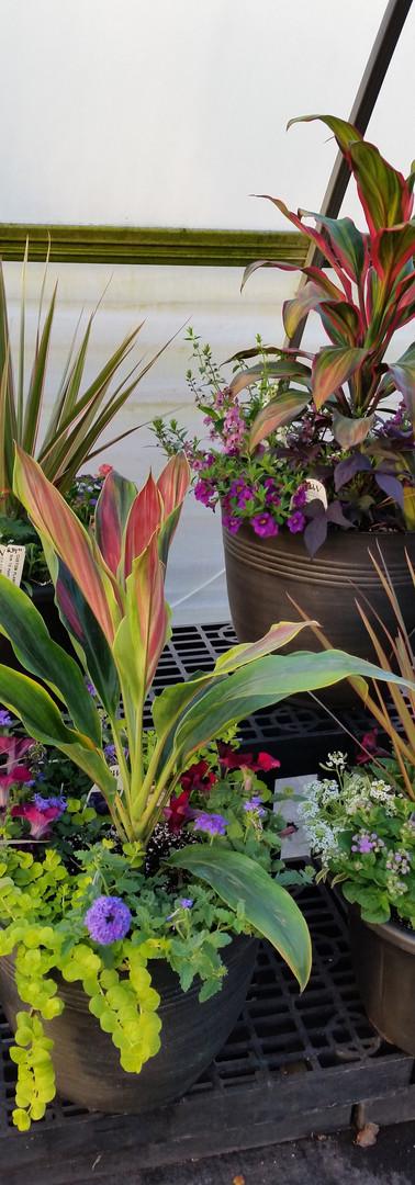 Tropical Planters