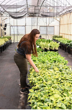 Woman selecting a houseplant from a greenhouse