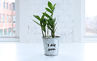 """A zz plant in a pot that reads """"I Dig You."""""""